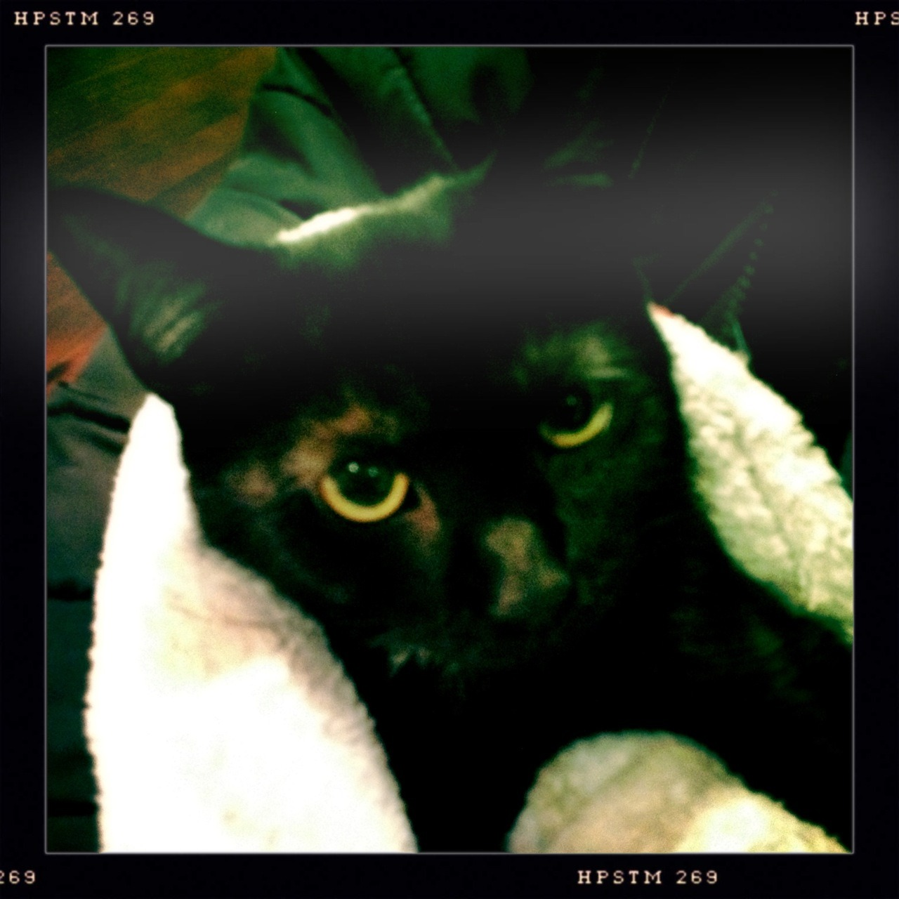 Kitten John S Lens, Pistil Film, No Flash, Taken with Hipstamatic