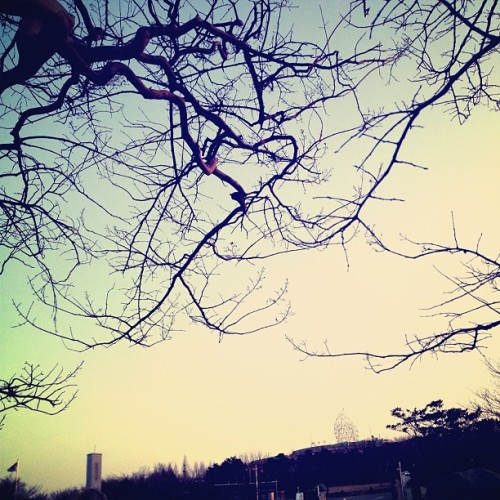 #sky #cloud #korea #busan #sunset #tree (Taken with Instagram at 민주공원)
