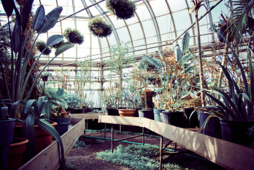Plant Nurseries are dreamy.