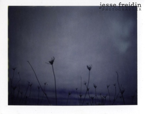 'Winter Field' - 2005 Camera: Polaroid 320 Film: Polaroid 669