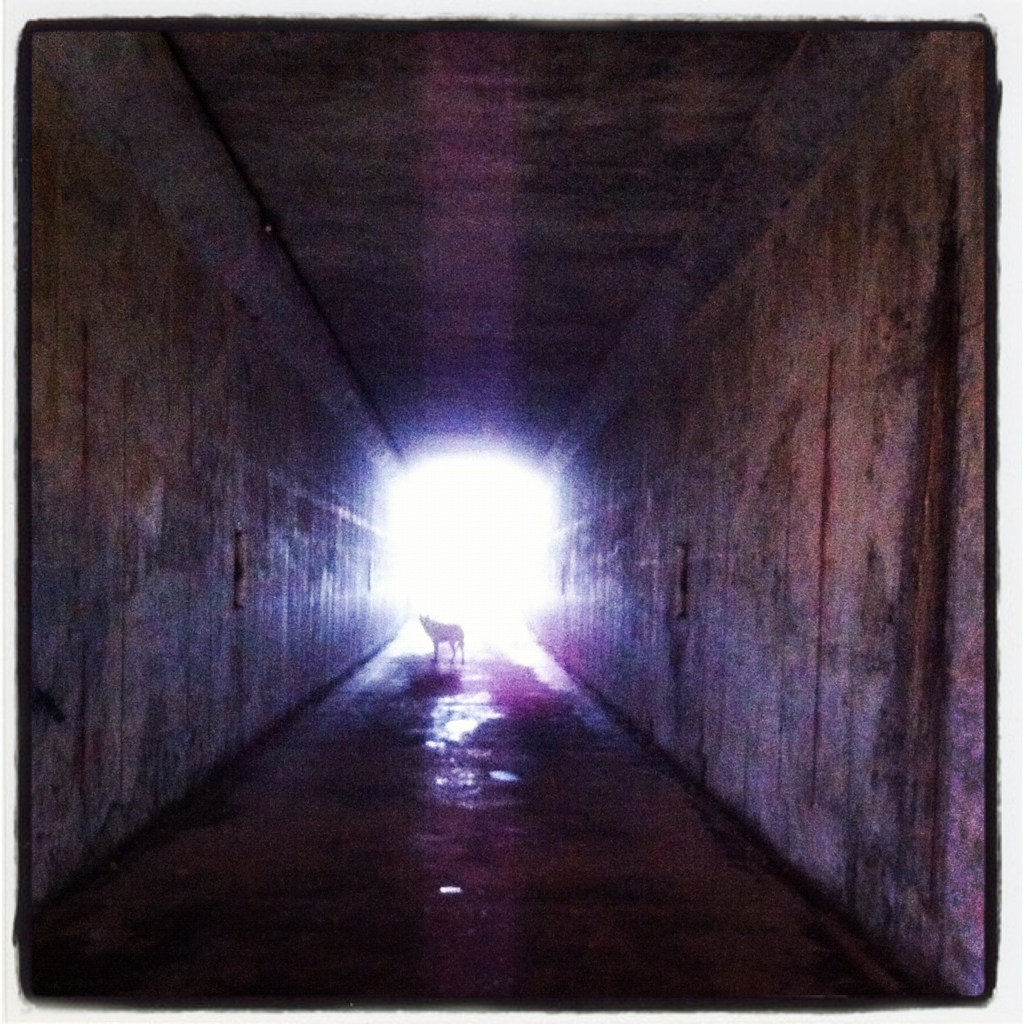 WWI era Battery Townsley, Spirit goes toward the light.  Marin Headlands from Rodeo Beach, CA.