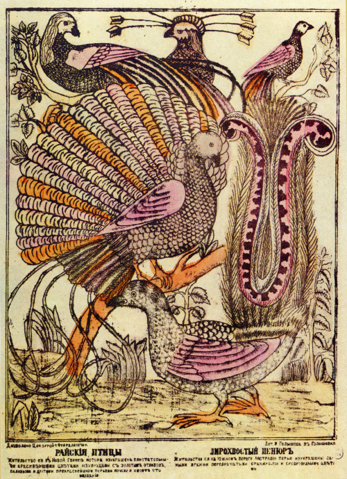 venusmilk:  Birds of Paradise, Russian copperplate 1879