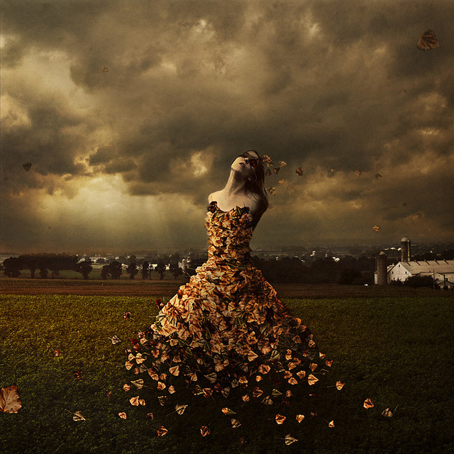the leaves of linden avenue by brookeshaden on Flickr.