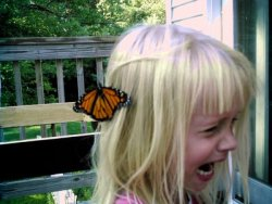 mexic-anus:  You appreciate that butterfly on your head you little bitch, vintage white girl bloggers would kill for a picture like that