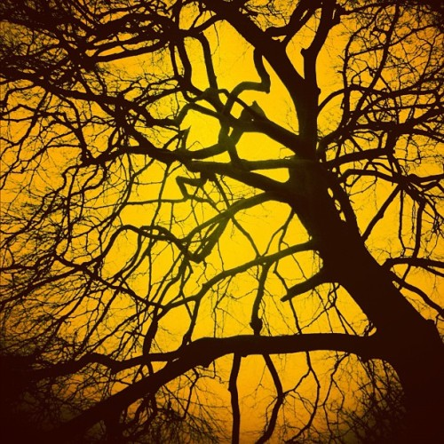 fotosyn:  #iphoneography #trees #orange (Taken with instagram)