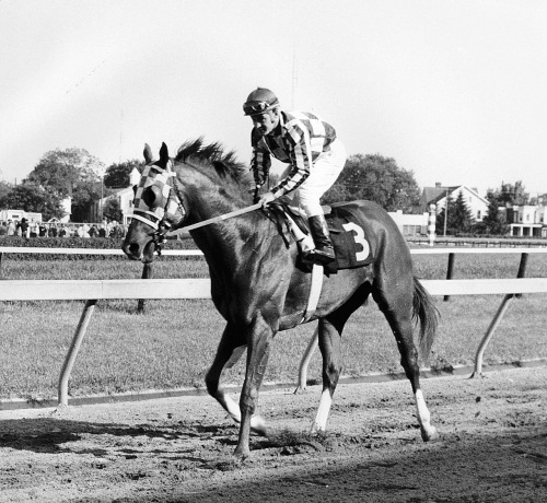 On March 30th 1970, American thoroughbred Secretariat was foaled in Virginia. In 1973, the chestnut colt became the first U.S. Triple Crown champion in 25 years, setting race records in the Kentucky Derby and the Belmont Stakes that still stand today.
