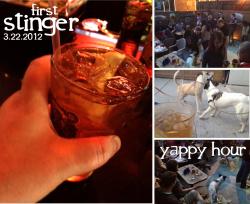Stinger / Yappy HourYou know something is really great when within a few moments you've decided you're going to do it again right away. Case in point, both the drink of the night and the event itself.People love to drink. People love their dogs. And dogs love other dogs and drunk people dropping bar food. The whole concept of the Yappy Hour is pretty win-win-win—ooh, look food—win. I just can't say enough good things about Jamie and the Blue Banana. His concept of the Yappy Hour on their back patio was just perfect. Great drink deals, pitchers full of dog biscuits, fried food flowing. The whole thing was already buzzing & barking by 6:45pm that evening. By 8pm, we had about a dozen dogs and several dozen humans drinking, talking, barking and sniffing butts with abandon. The patio is modest, but the atmosphere is generous. Several of my friends and family were able to attend, several with their dogs, including a nice sampling of canines and owners from the neighborhood. It was fantastic and people were loving the event. And we raised some serious money for the Washington Animal Rescue League. Everything was so fantastic. So much so in fact, that Jamie and I are planning on co-hosting a monthly Yappy Hour through the spring/summer/fall. Keep your eyes peeled for upcoming dates. Yep, if you missed this one, don't fret—there are more to come.I should note that the Blue Banana allows for dogs on the back patio anytime it's open. So if you wanted to get your dog walk and your drink on, this is your kinda neighborhood bar. But oh, let's talk about the evening's drink. Oh that drink! One of the more genius elements of each event I'm able to host at the Blue Banana is Jamie's invention and devotion to my firstdrink project. Each event has it's own unique cocktail to allow everyone to have their own firstdrink. And tonight's was just as great—actually better—than the last.Its called a Stinger. A intoxicating mix of twisted tea, lemonade and a solid shot of Jack Daniel's Tennessee Honey. Hot damn, it literally tastes like the answer to a hot day in July. It was sweet with the crisp ice tea flavor, refreshing with the lemonade mingling and the sweet, slick, alcohol rich honey bite from the Jack Daniels. It was summer in a glass. Sipping sweet tea on the dock. Sharing some southern love through a straw. You get the idea… It might actually be on the tastier drinks I've had on the Adventure. It's one of my top favorites, hands down. I think I could honestly drink a Stinger anytime, anywhere. And yep, I had two. Dogs, drink, friends and fans. It was a damn good night. Thank you to everyone who was able to make it out. Thanks to Jamie and the Blue Banana and thanks to all the sweet pups and their owners who were able to make it out and enjoy a warm March evening for charity.Man's best friend just got VIP status at your favorite new bar. Raise the woof. (yep, I went there.)Cheers, BenPS: 4… count them, 4 new firstdrinks tomorrow at a special pop-up restaurant. And then I rest? Nope. 2 more firstdrinks this weekend. And then I rest? Oh, who knows anymore. Just enjoy the ride.