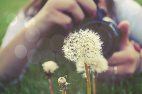 stupidplace:  Make a Wish by Colton Witt Photography on Flickr.