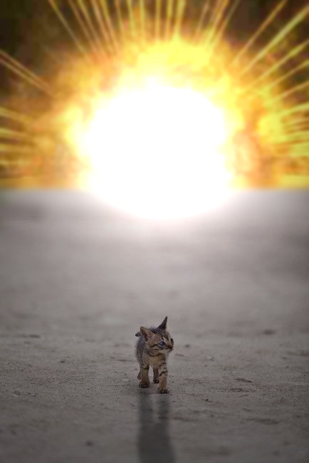 arte1misia:  pickumater:  epic4chan:  cool cats don't look at explosions.  画  OMG   Lovely!!!