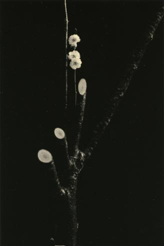 "Keeping in mind the work of Masao Yamamoto as I see Spring unfolding. ""I dared to associate the word 'tender' with 'melancholy' rather than the word 'suffocating'; this is what Yamamoto's photos reveal to me - a tender melancholy."" - ARPAÏS du bois (via Kawa = Flow #1590, 2010 - Masao Yamamoto - Artists - Jackson Fine Art - Photography - Atlanta)"