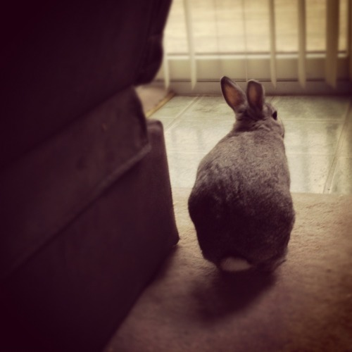 dailybunny:  Bunny Gives You the Cold Shoulder… Unless You Have Banana Thanks, Frances!