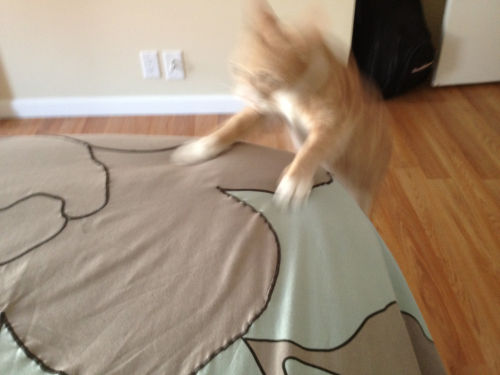 I leap onto the bed so fast that the camera can hardly capture me!