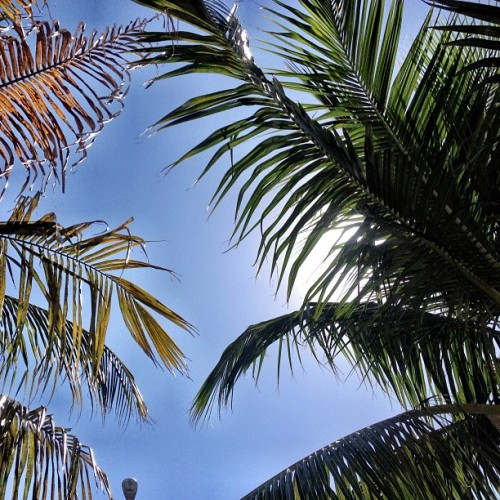 harrybeee:  Palm trees never get old