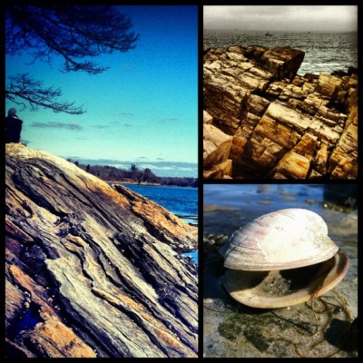 #maine #ocean #clam #sea #rocks #bio #geology (Taken with instagram)