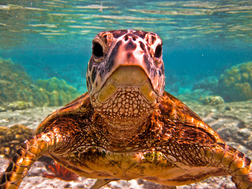 theoceaniswonderful:  I'm Ready for My Closeup by Arian Durst