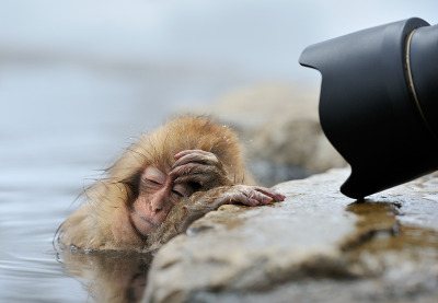ruineshumaines:  Oh no, not again! by Marsel van Oosten