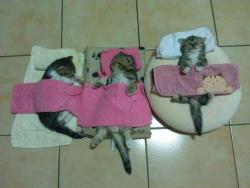 Kittens fast asleep in bed ♥