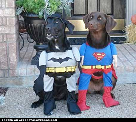 pinterest What now Super Dog? Not sure Bat Dog!! Not sure Original Article
