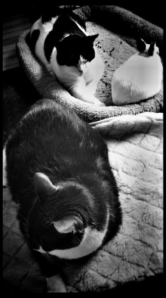 Monochrome boys on Flickr.the bros all being cute together. a somewhat rare occurence.