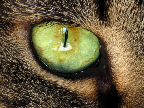 Cat Eye by BlueRidgeKitties