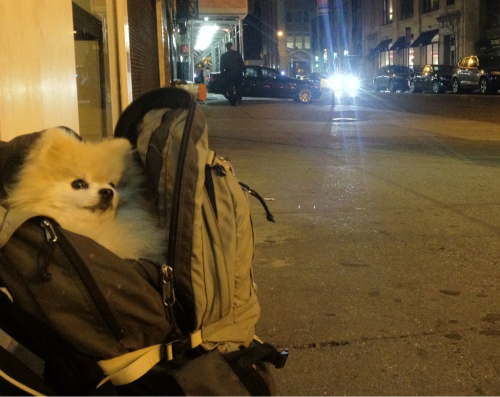 tommypom:  I'm all packed and ready to head home.