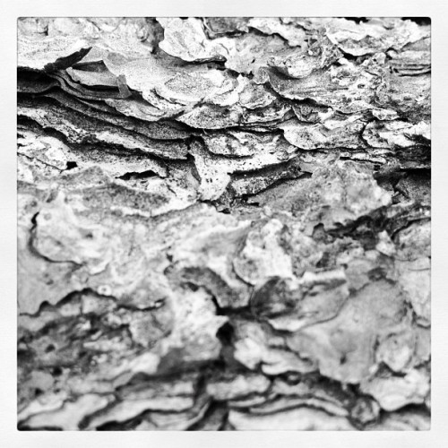bark. (Taken with instagram)