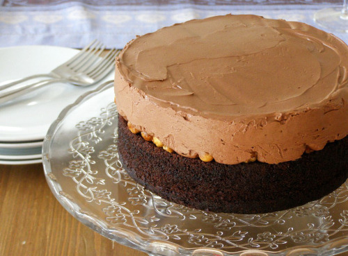 Chocolate hazelnut mousse gâteau (with recipe) by maplespice. So, what I'm seeing here is effectively a Nutella mousse cake… Sold.
