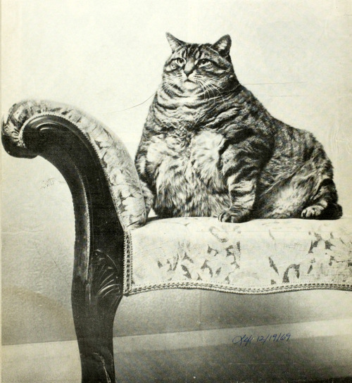 FAT CATAgatha Higgins of Petersham died recently, but her pet cat Joseph hasn't a worry in the world. In her will, Miss Higgins left him £369, enough to keep Joseph in cream, fish and rabbit steaks, his favorites, until 1976. After that, Joseph may have to work. At 28 pounds, he might hire out as a bookend.