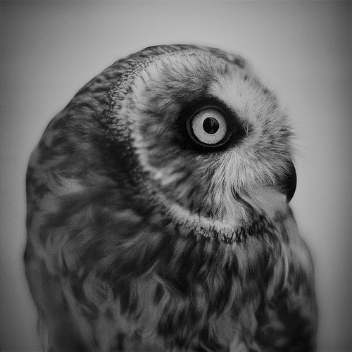 spidercamp:  portrait of an owl (by daylessday)