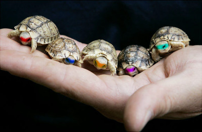 fishimawesome:  that's cute.,ninja small turtles