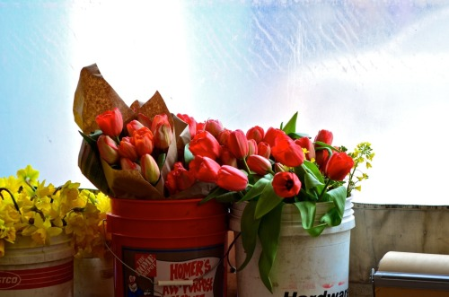 Tulips at the Market.