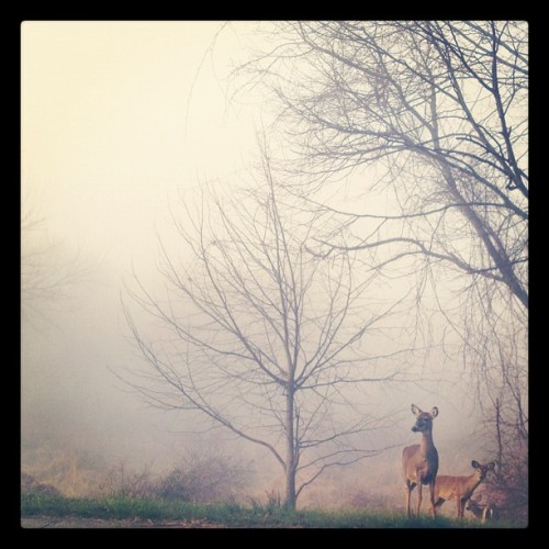 Caught a pic of my forest friends on a foggy day this week…