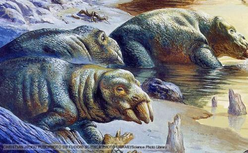 Placerias Placerias was, at 3.5m in length, the largest herbivore of the Late Triassic Period, whose chunky, barrel-like body may have weighed a little under a tonne. Despite its appearance, Placerias was not a dinosaur, but a type of mammal-like reptile. It was the last of the Dicynodonts, so with its extinction that whole lineage disappeared. Like other dicynodonts, Placerias had tusks which it used to dig up roots and a beak to chop up its food. (via: BBC Nature)      (image: Christian Jegou)