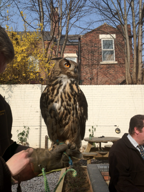 Today we hosted an array of birds of prey. This guy was our favourite.
