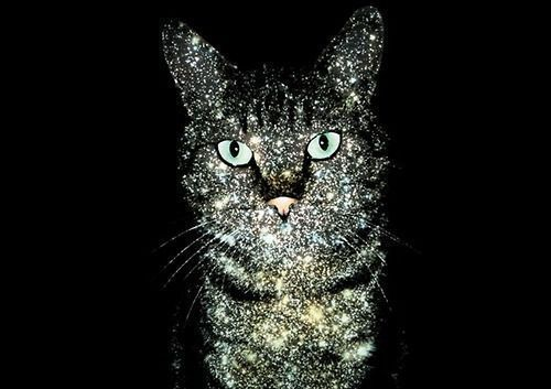 orgasmic-couture:  Purr glitter kitty <3