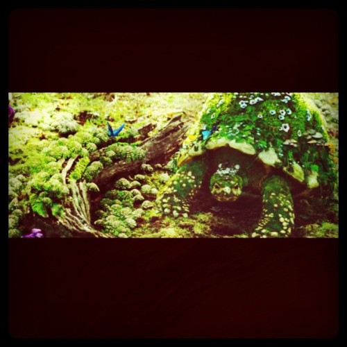 #turtle #beauty #nature #animals (Taken with instagram)
