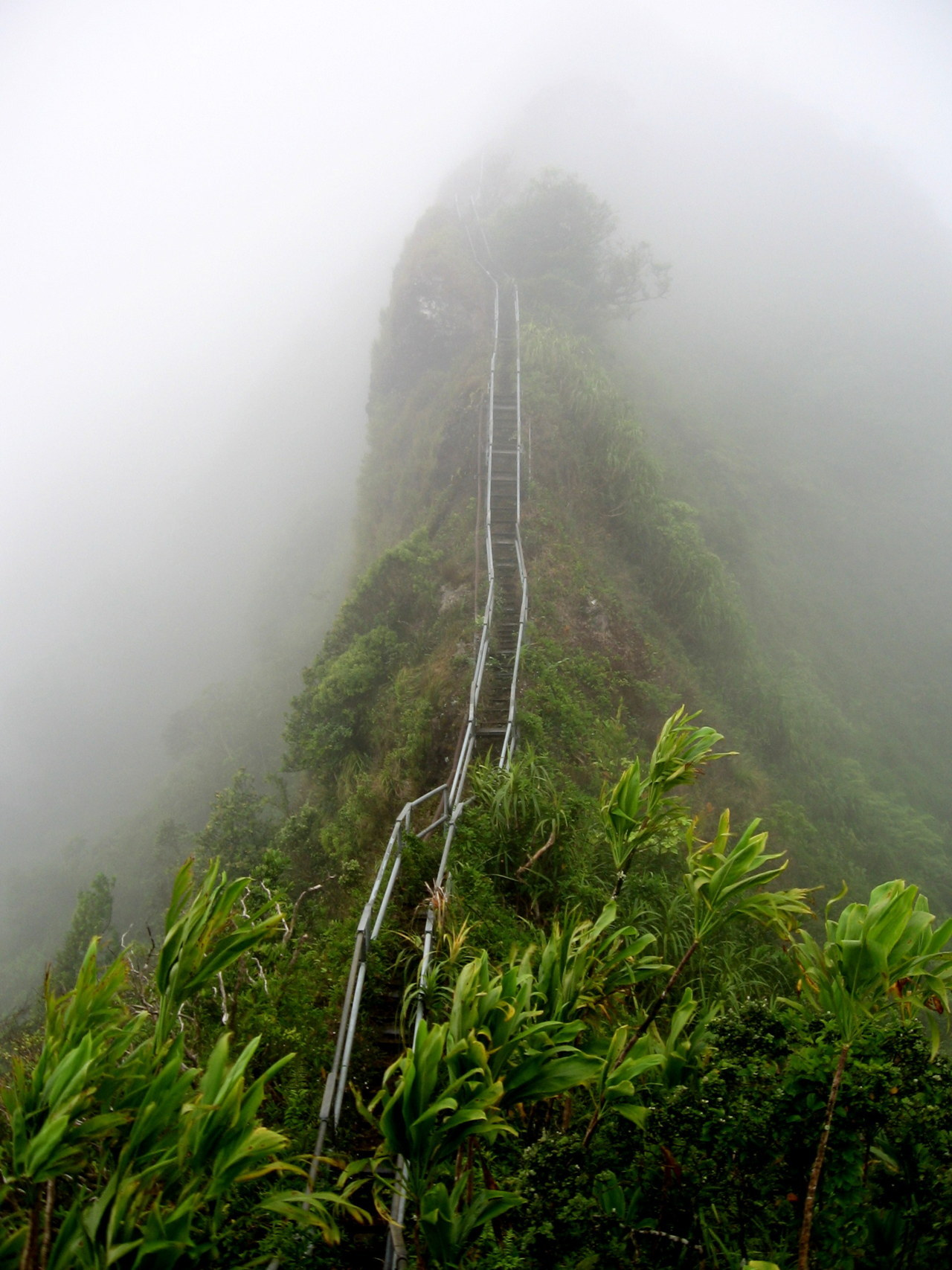 scarydads:  grvnge:  STAIRWAY TO HEAVEN IN HAWAII IS NO LONGER OPEN AND I'M SAD BECAUSE I LIVE IN HAWAII AND I NEVER GOT TO HIKE THIS.  wait it's closed forever whAT