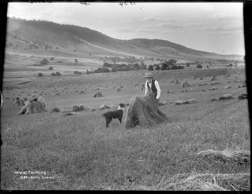 Wheat Farming by Powerhouse Museum Collection on Flickr.