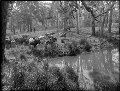 A Watering Place by Powerhouse Museum Collection on Flickr.
