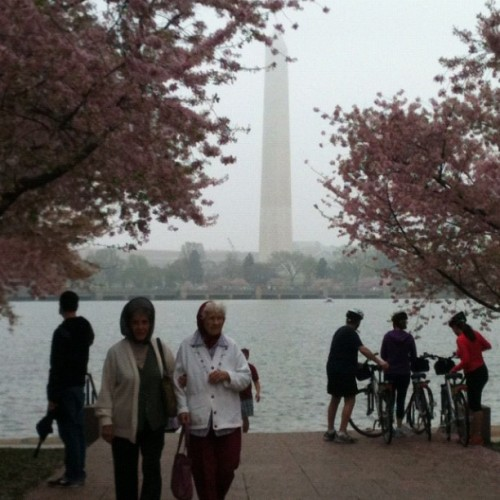 100 Years of DC Cherry Blossom Festival, and those two ladies? My great aunts! (Taken with instagram)