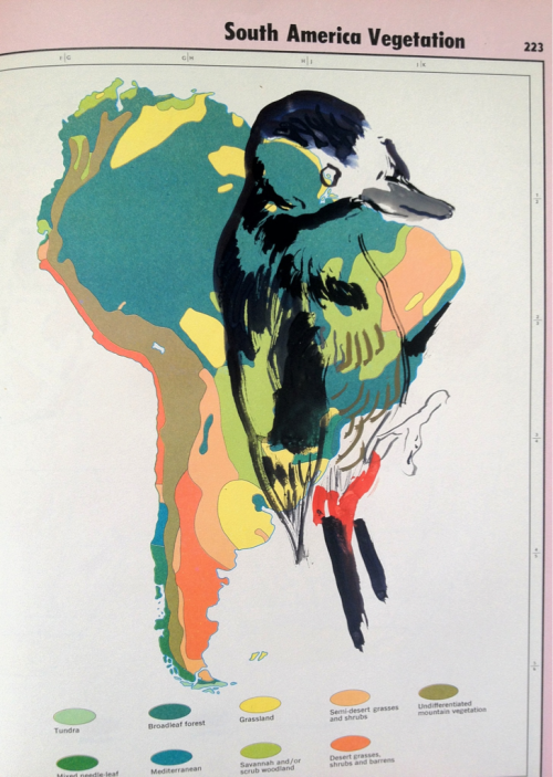 alexcarletti:  Alex Carletti Animal Atlas: Bird