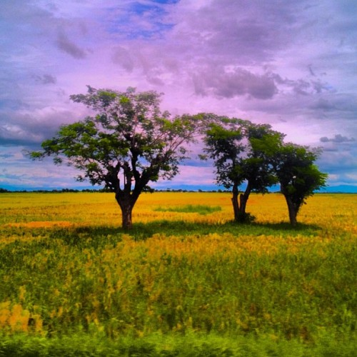 #ricefields #nuevaecija #philippines #iphoneography (Taken with instagram)