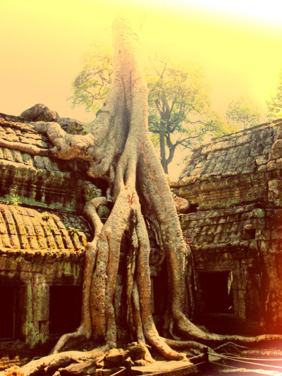 A part of Ta Phrom, Angkor Archaeological Park - Siem Riep, Cambodia