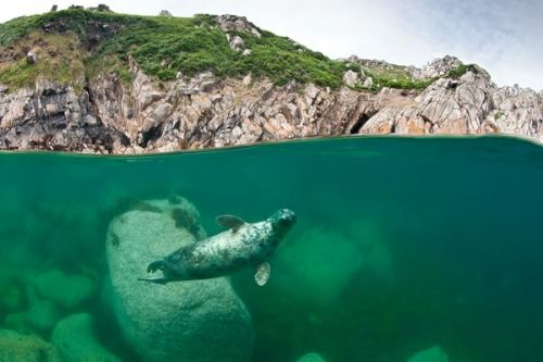 Grey Seal Beneath Cliffs (via Best Wildlife Pictures: British Nature Awards 2011)