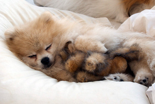 tommypom:  sleepy time, cuddling my stuffed animal.