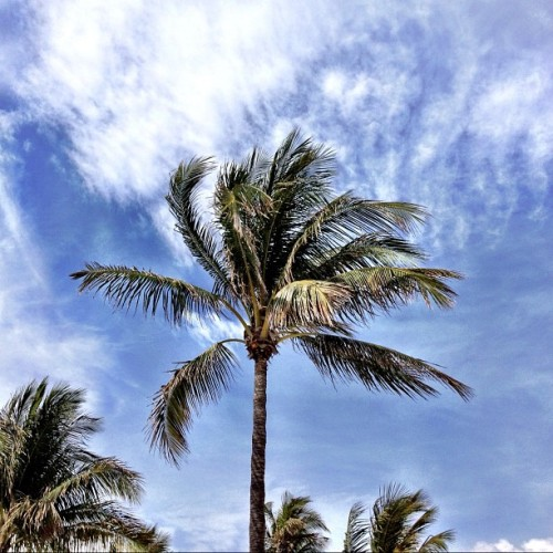 The wonderful world 2. harrybeee:  Palm tree this morning