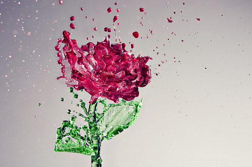 ruineshumaines:  317/365 A Splash of Rose (by Yugus)