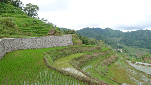 Back from the mountains. Banaue, Ifugao was a beautiful, mystical place. But I'm glad to be home.