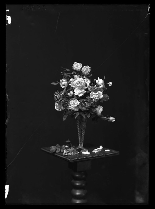 Portland roses in a vase  Portland roses in a glass or crystal vase, on a table with black background. 1910.