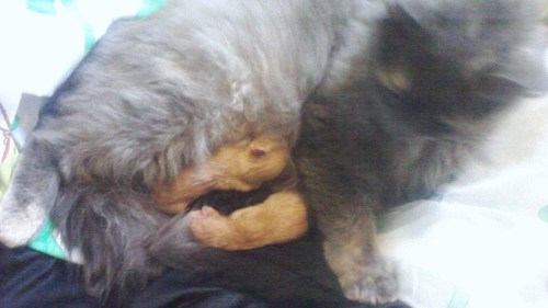 Aww! My cats babies were born last night ^_^